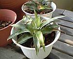 Plant_01