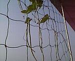 Plant_03